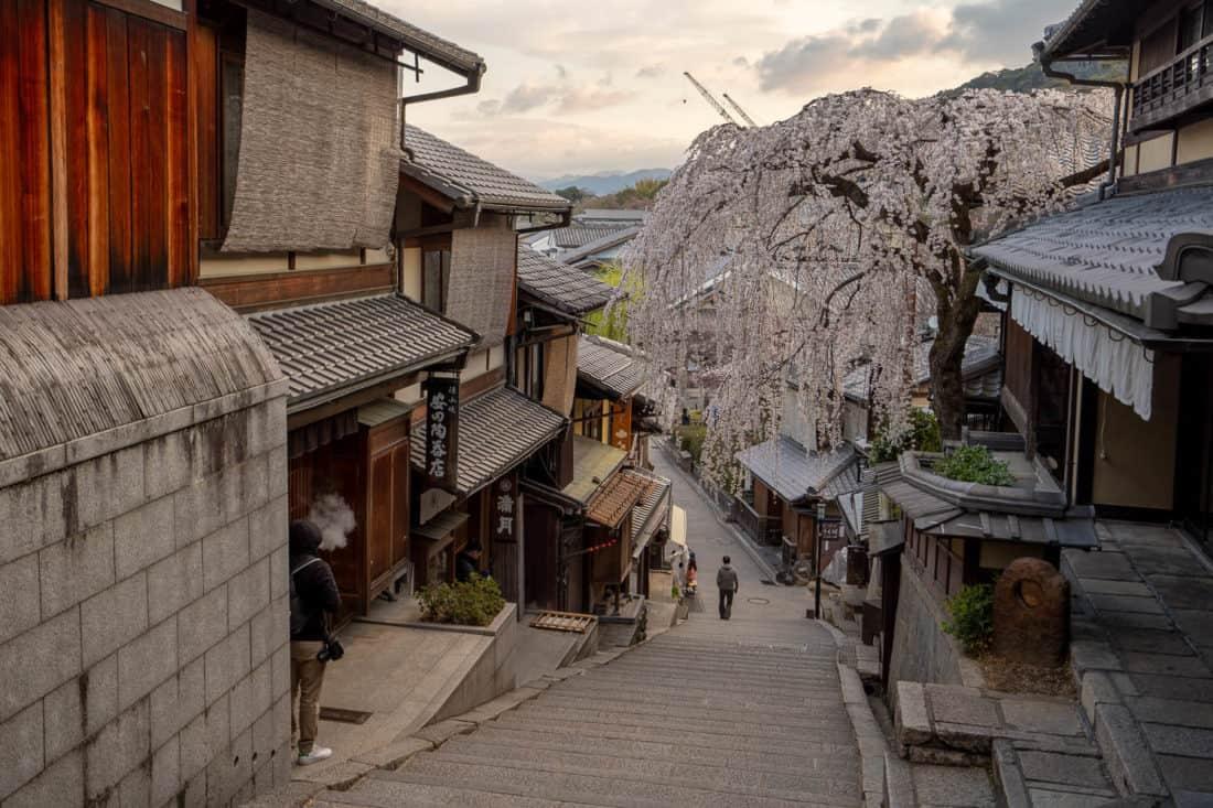 Weeping cherry blossom tree on Sannenzaka in Higashiyama, Kyoto