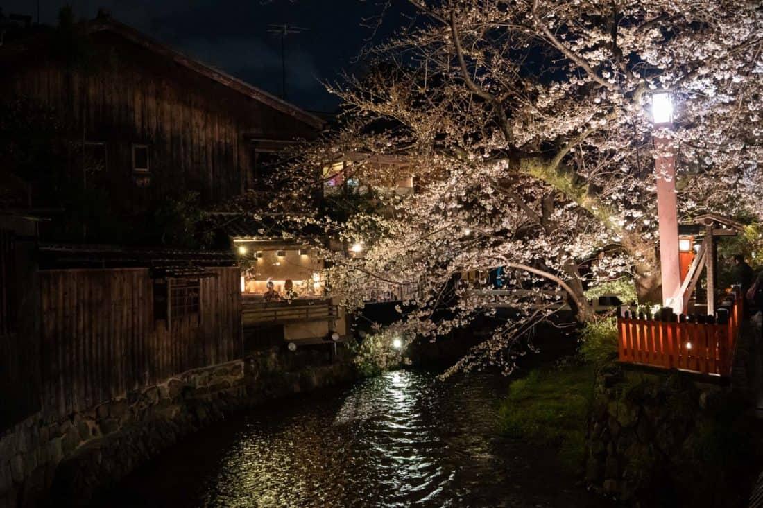 Restaurants at night along the Shirakawa Canal in Gion, Kyoto during sakura season