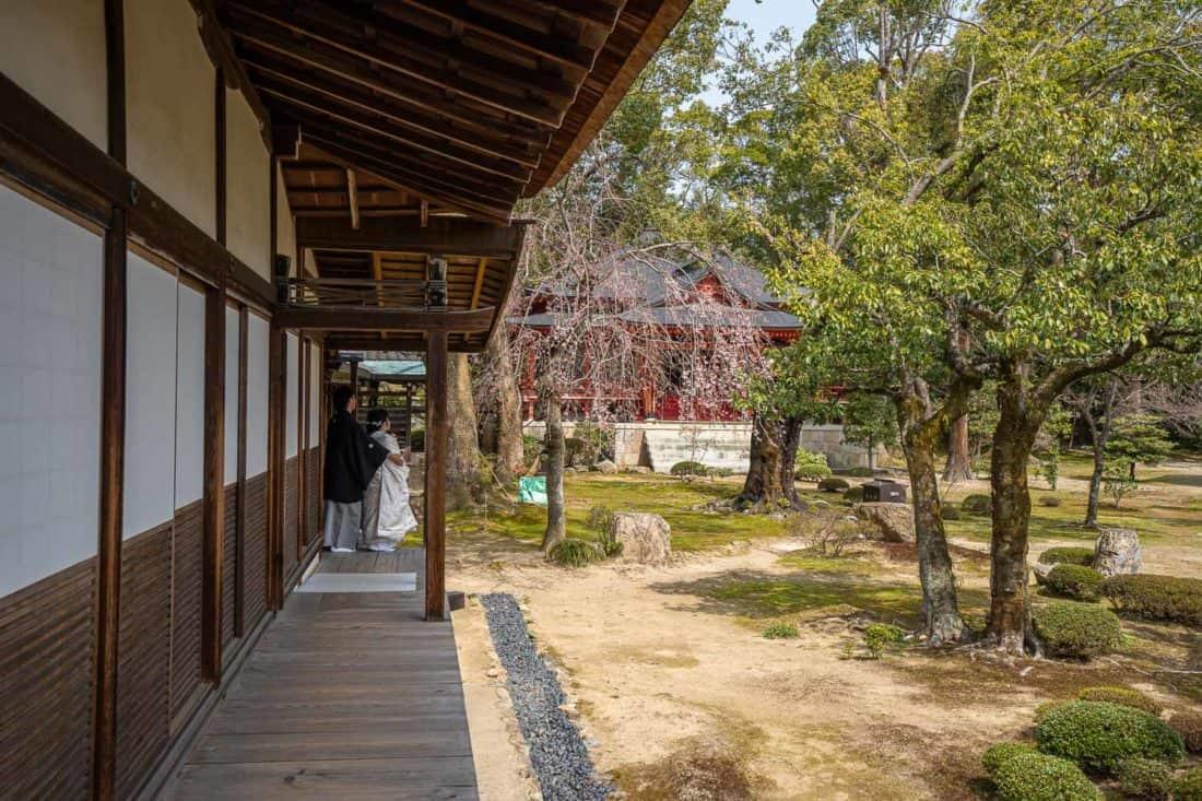Wedding photo shoot by cherry tree in Daikaku-ji Temple courtyard, Kyoto