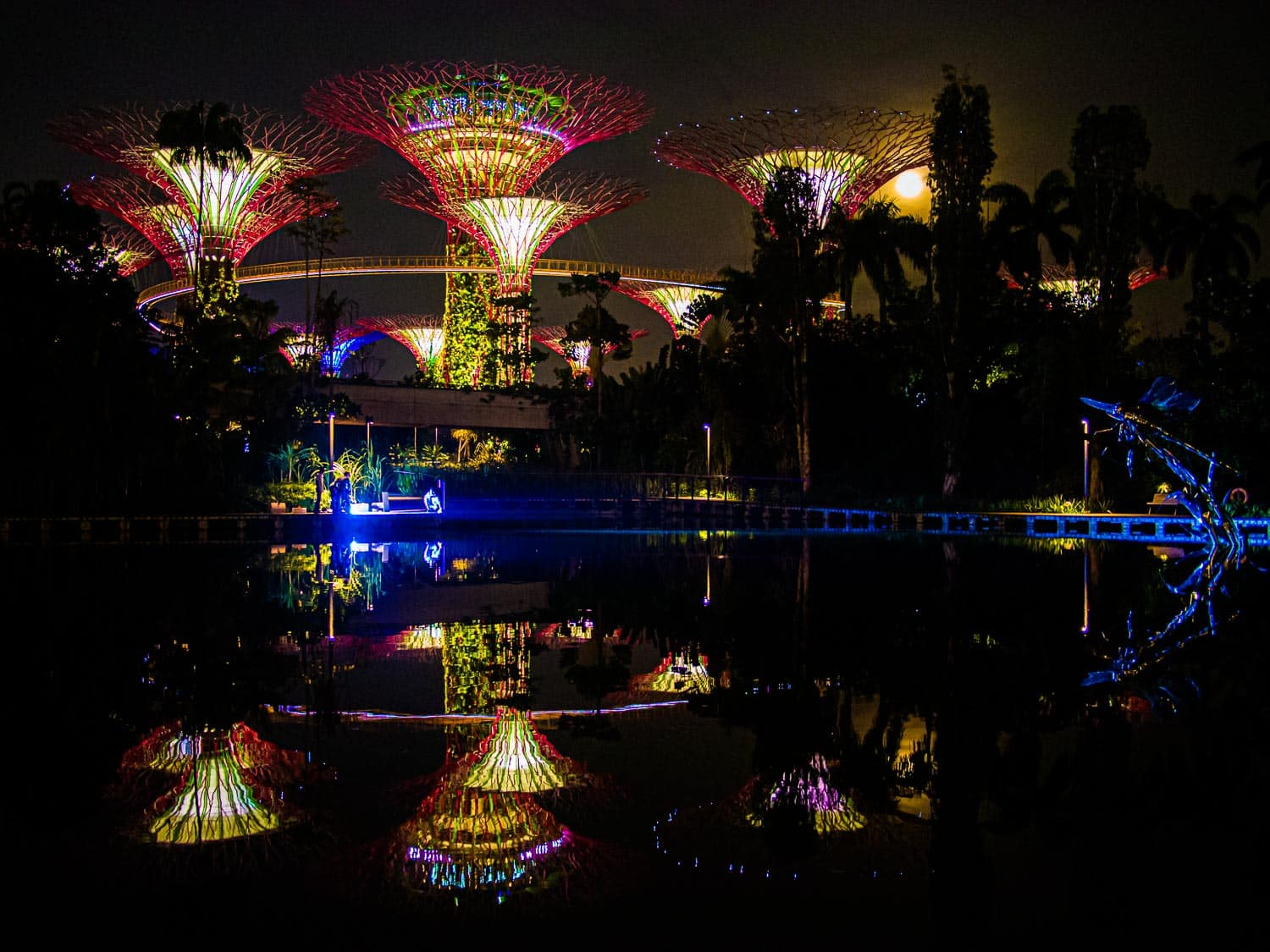 Supertrees at Gardens by the Bay reflected in a pond - one of the highlights of any Singapore itinerary