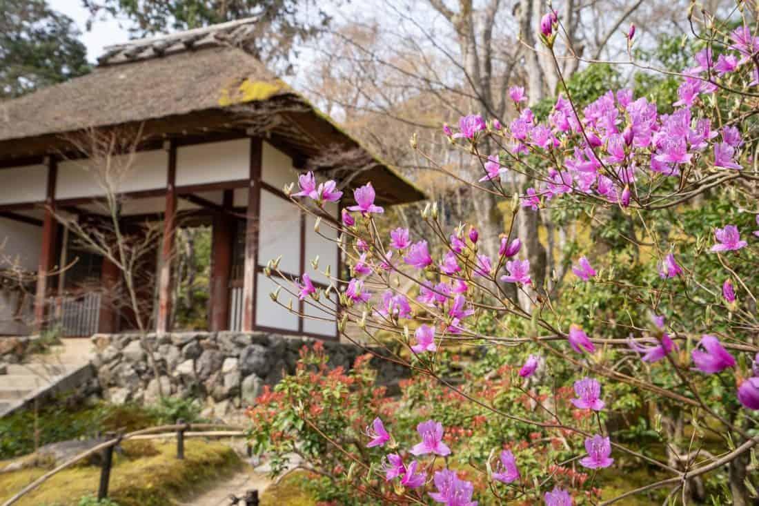Jojakko-ji, a hidden gem in Arashiyama, Kyoto