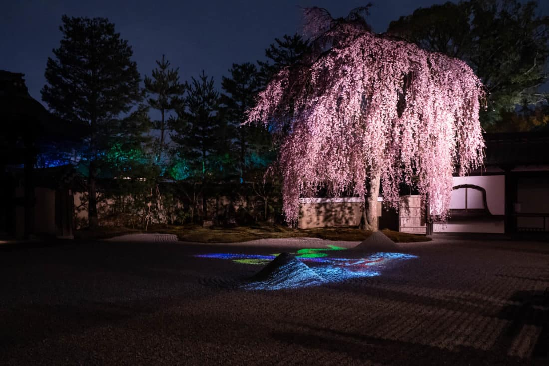 The rock garden at Kodaiji during the night illuminations in April