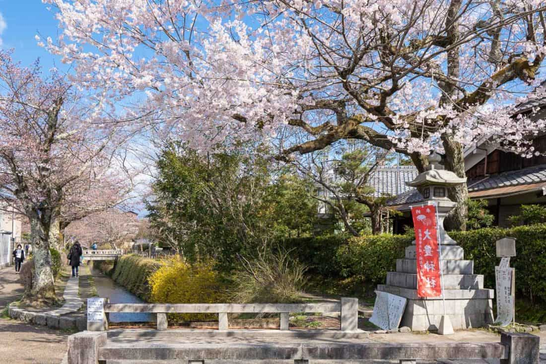 Cherry blossoms along the Philosopher's Path, one of the most popular places in Kyoto