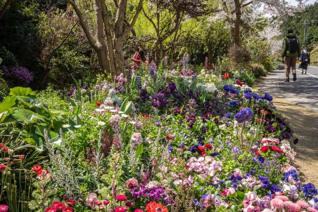Monet garden pathway to Chichu Art Museum on Naoshima Island