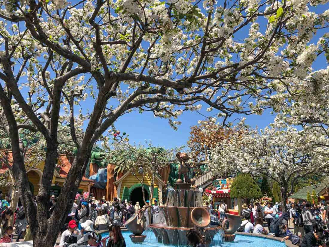 Cherry Blossoms at Tokyo Disneyland Toontown in April