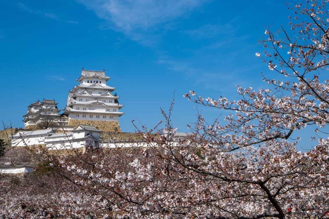 Hineji Castle in cherry blossom season