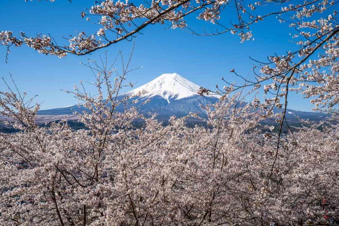 Mount Fuji and cherry blossoms at the Arakurayama Sengen Park in the Fuji Five Lakes area