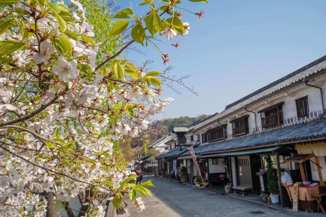 Cherry blossoms in Kurashiki Japan