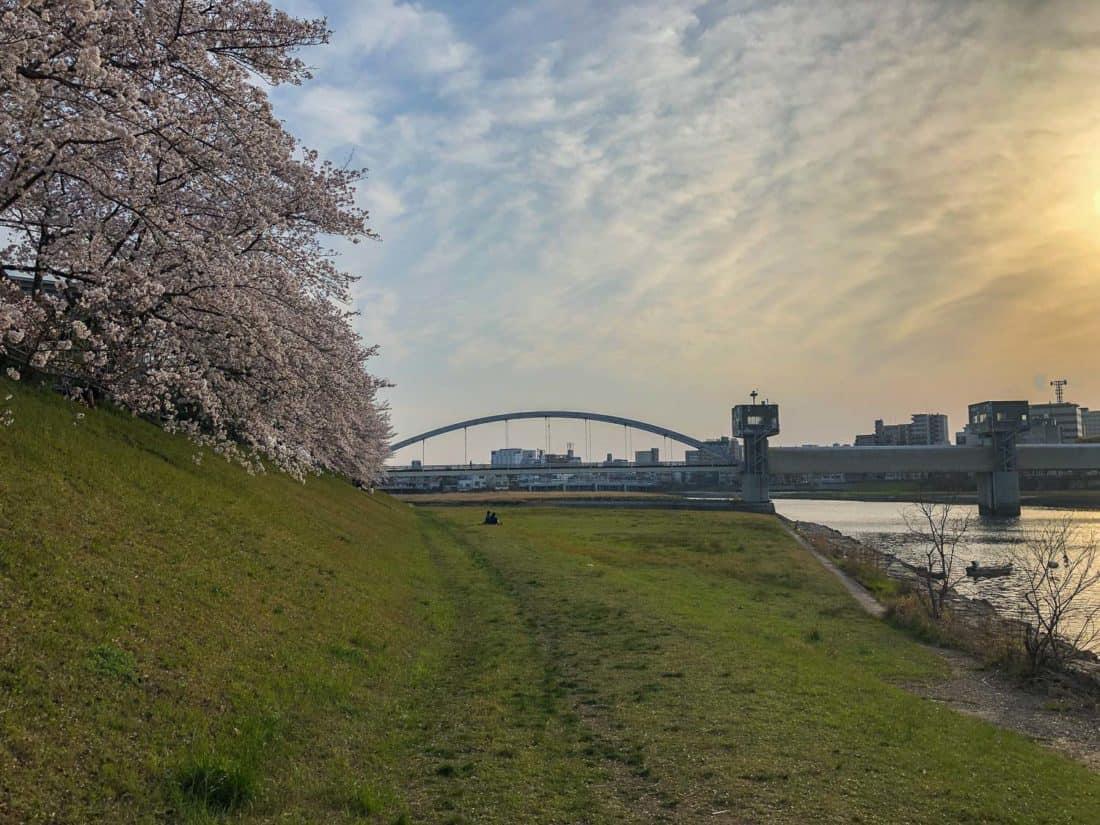 Asahi River Sakura Road in Okayama