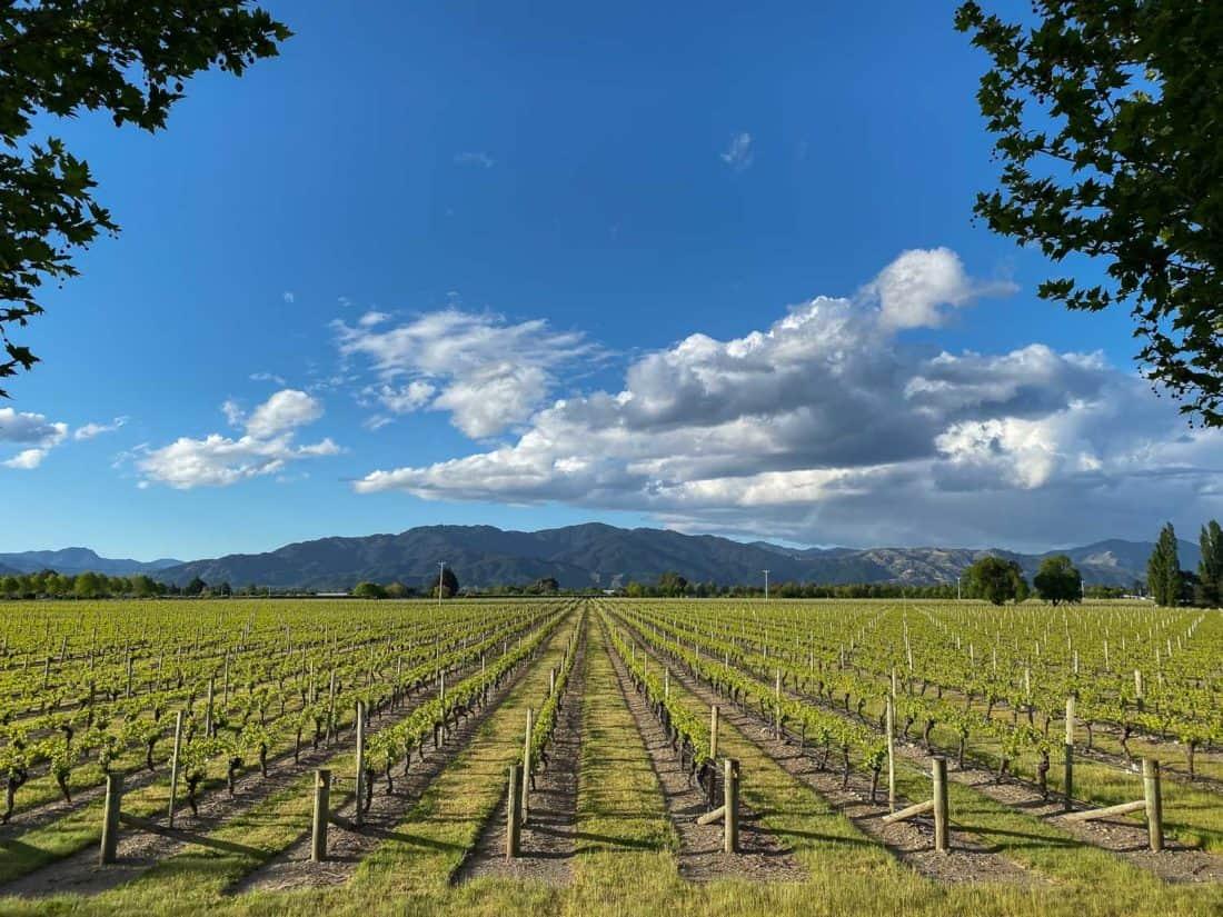 Vineyards in Marlborough New Zealand