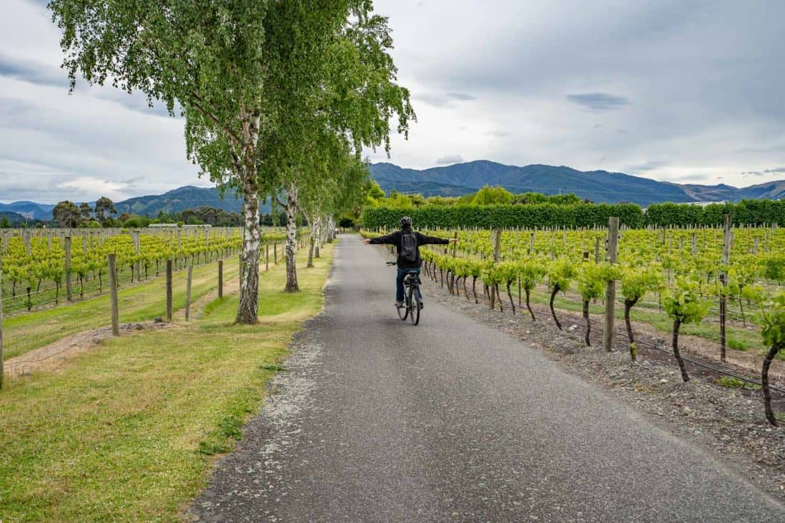 Cycling through the Marlborough wineries in New Zealand