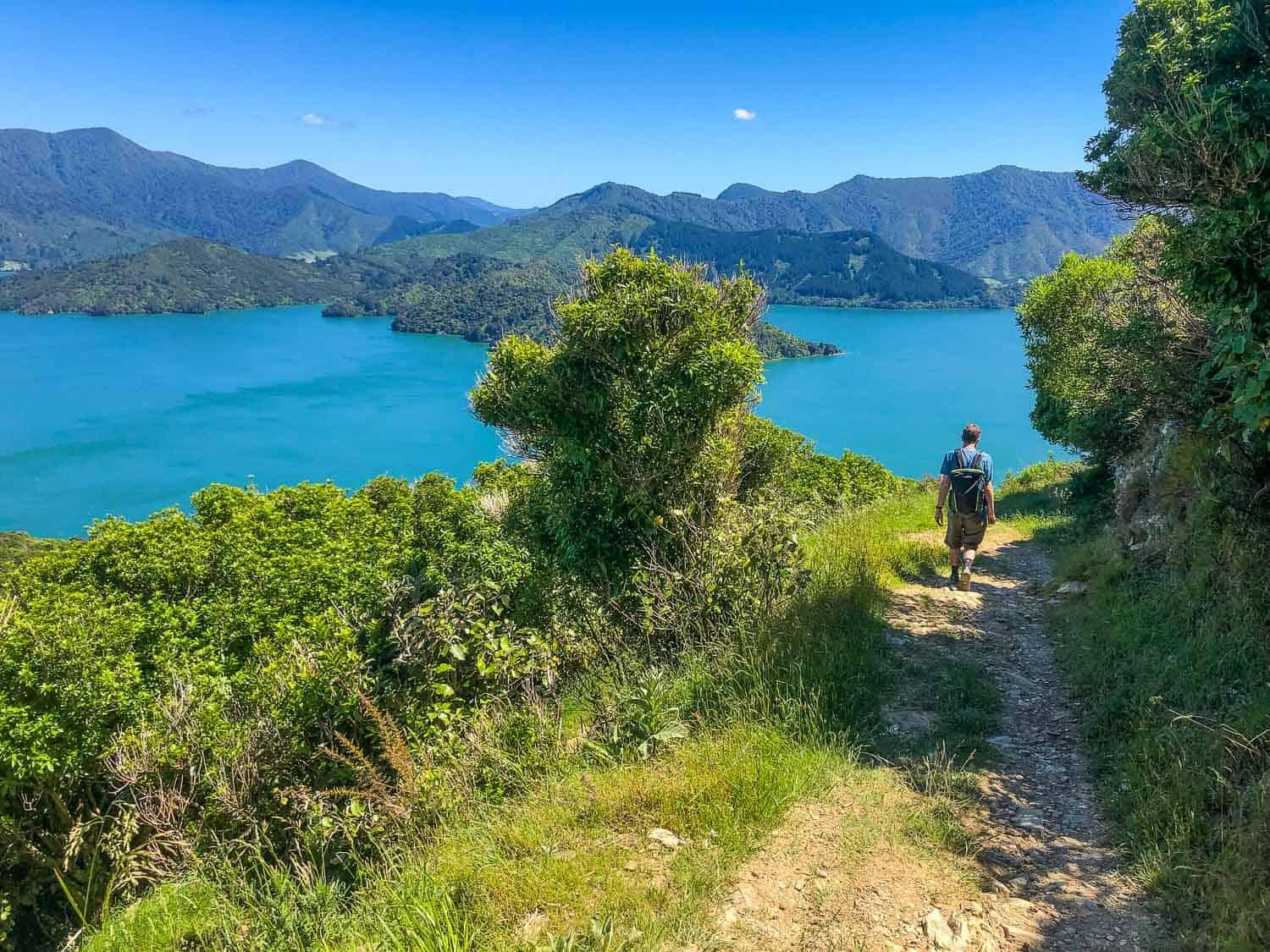 Walking the Queen Charlotte Track in the Marlborough Sounds, New Zealand
