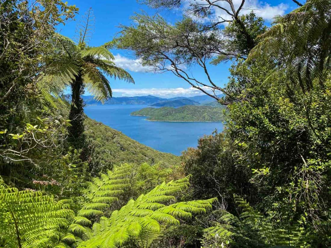 Ferns and sea view from Day one on the Queen Charlotte Track