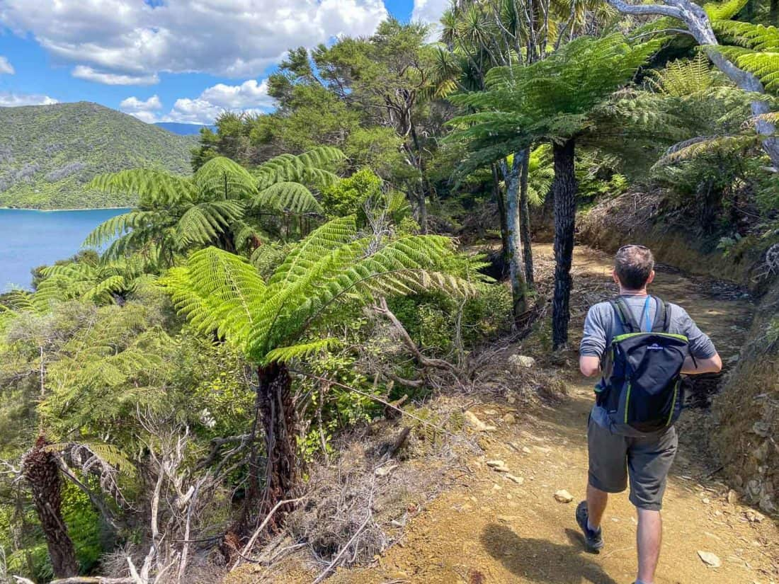 Walking the Queen Charlotte Track on Day 1 from Ship Cove to Furneaux Lodge