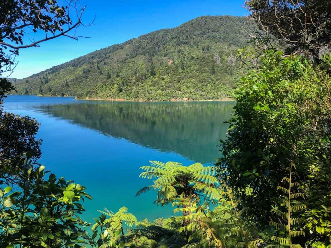 View on Day 2 of the Queen Charlotte Track