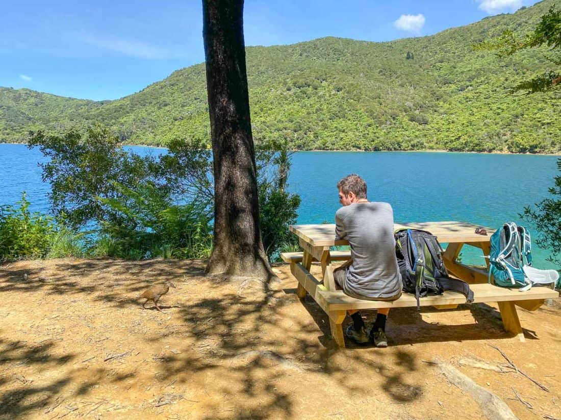 Weka at a picnic table on Day 2 of the Queen Charlotte Track