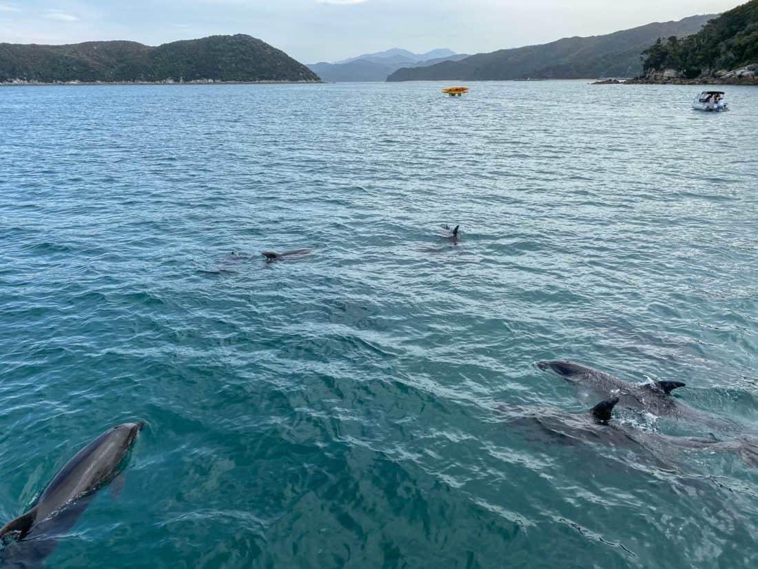 Dolphins in Abel Tasman National Park