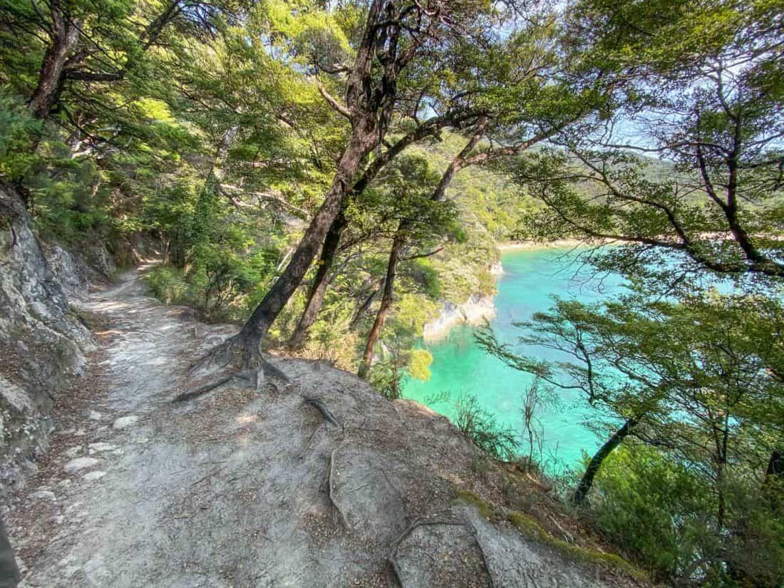 Abel Tasman Coast Track through forest with sea views