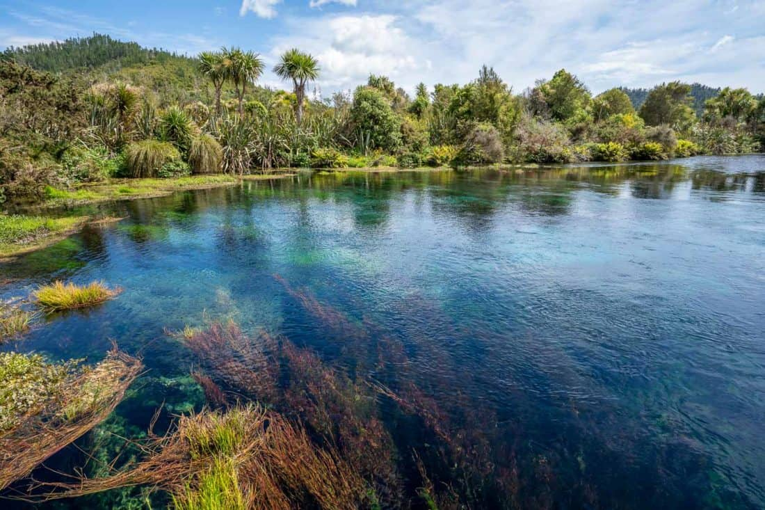The clear water of Te Waikoropupu Springs visited on a day trip from Nelson New Zealand