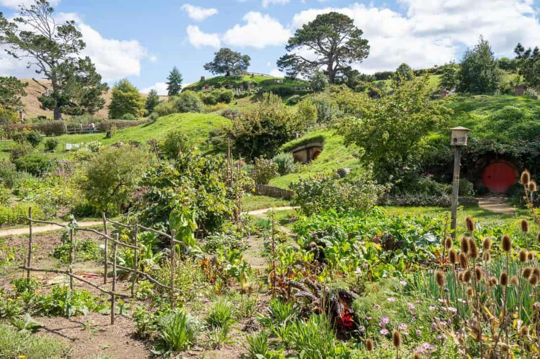 Vegetable garden in Hobbiton New Zealand