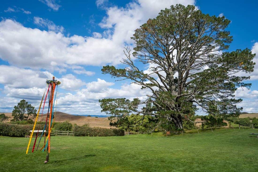The party field and pine tree at Hobbiton Movie Set, New Zealand
