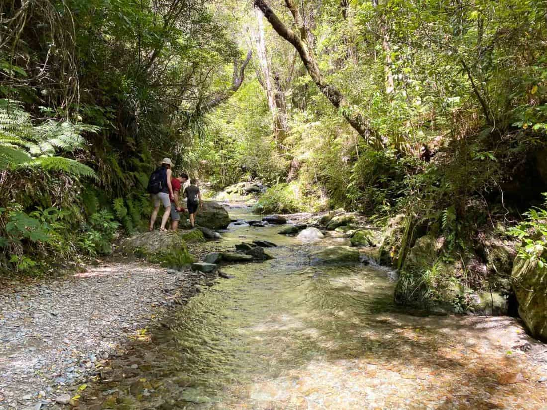 The river in the Brook Waimārama Sanctuary, a must see in Nelson NZ