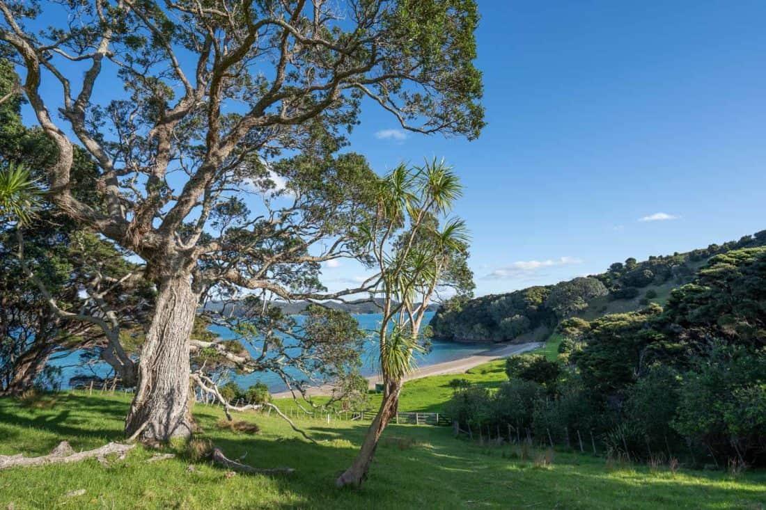 Tree above Cable Bay on Urupukapuka Island
