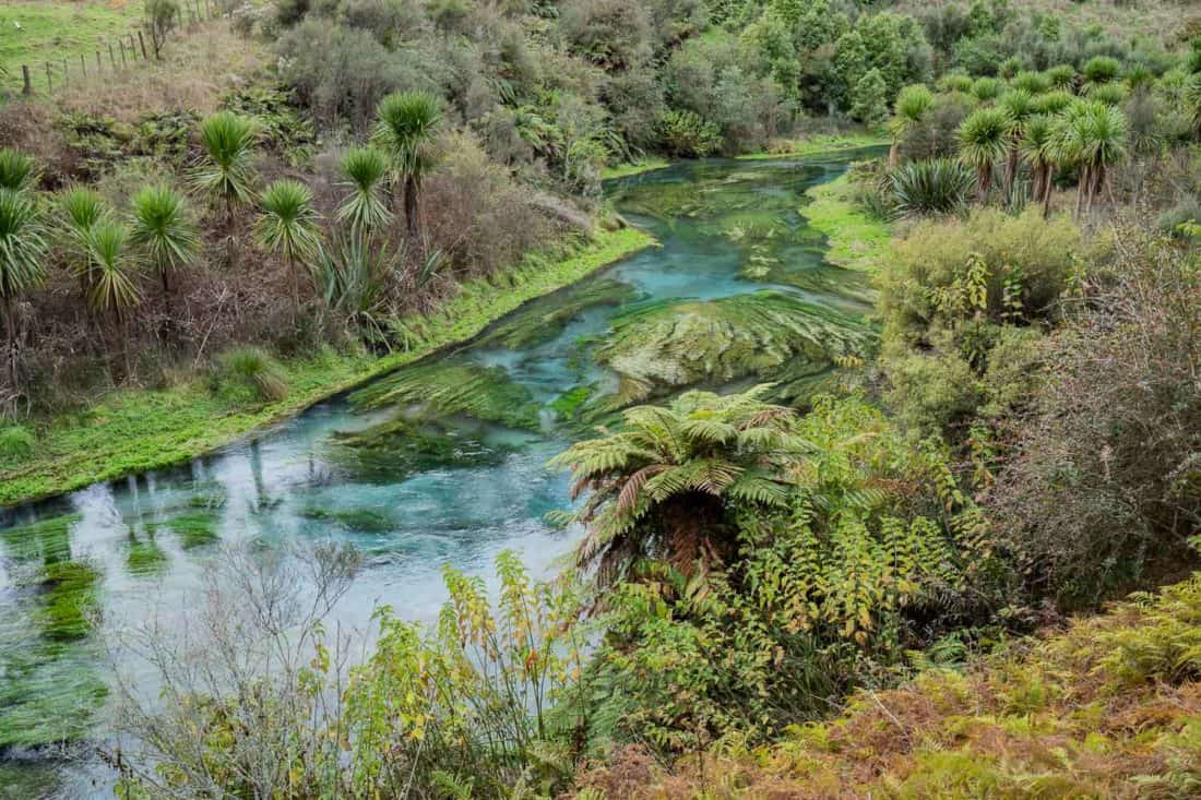 Blue Spring Putaruru on New Zealand's North Island