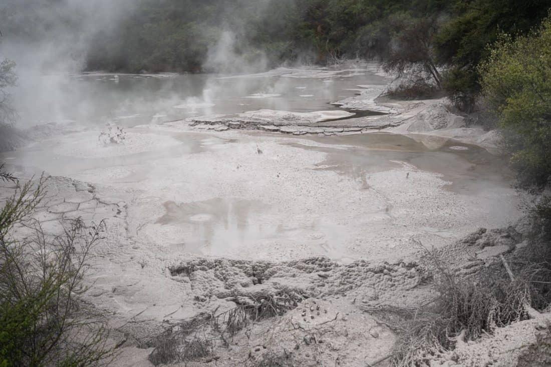 Mud Pool near Wai-o-Tapu