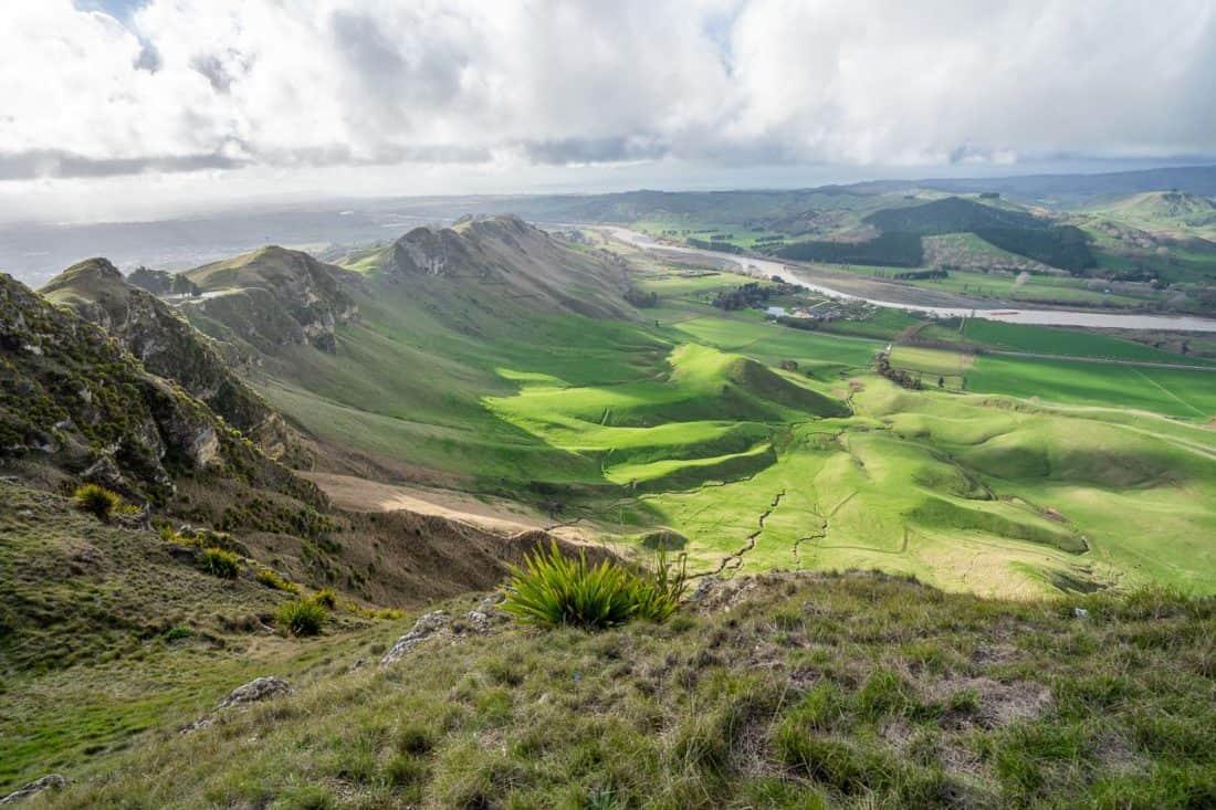Craggy Range Vineyard from Te Mata Peak, Hawke's Bay