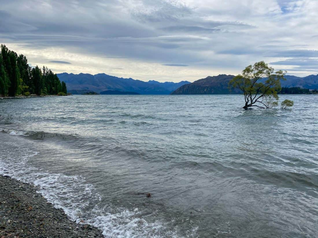 That Wanaka Tree on a cloudy day