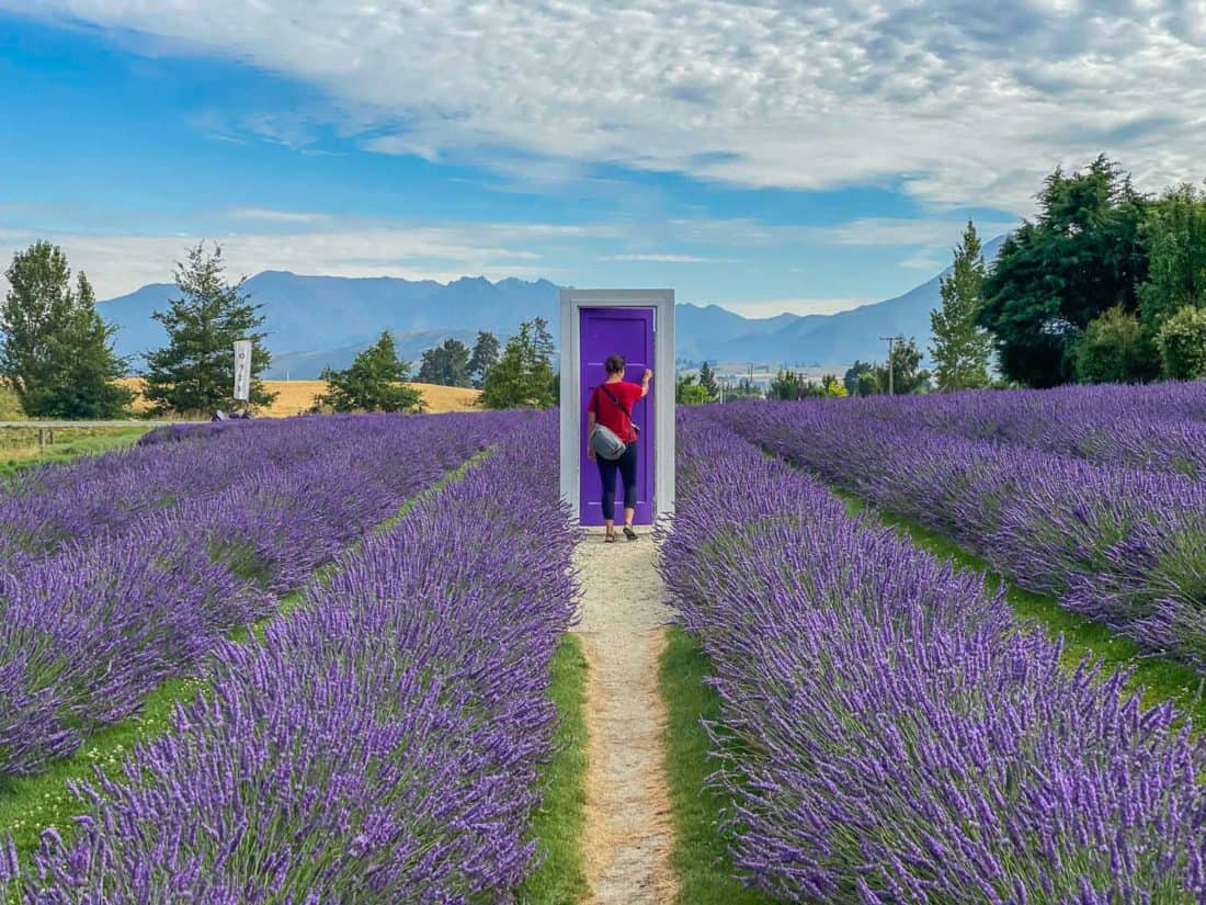 A purple door in a lavender field at Wanaka Lavender Farm, a top Wanaka attraction