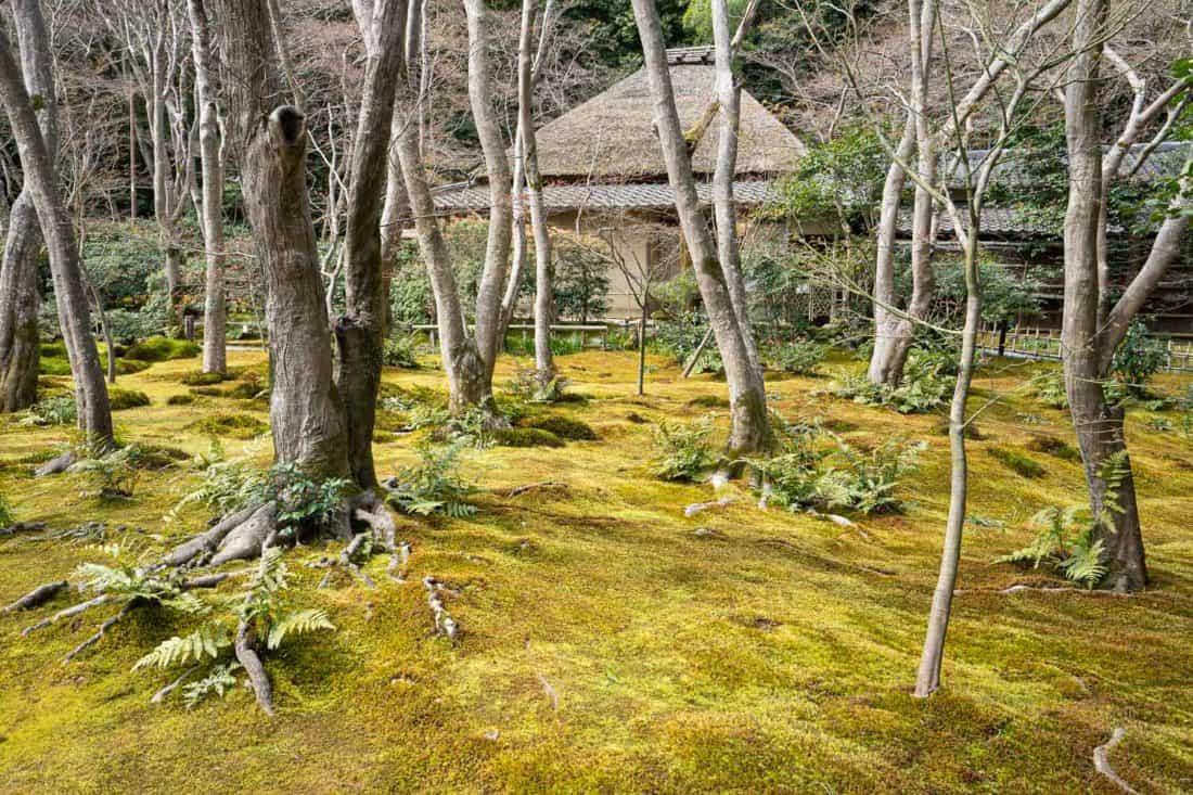 Gio-ji moss temple in Arashiyama, Kyoto