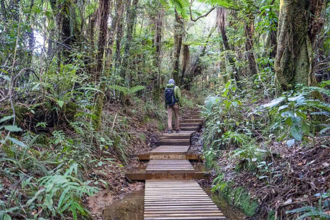 Hiking to Pouakai Tarn on boardwalk through forest in Taranaki