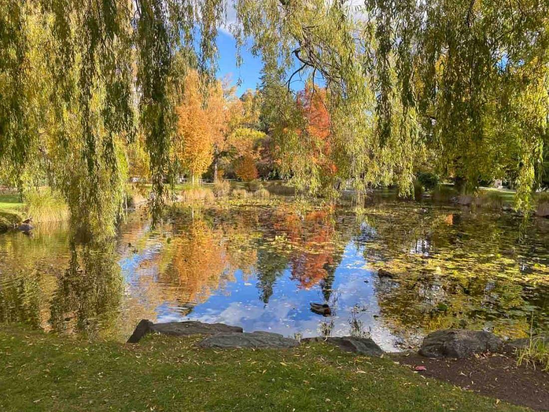 The pond in Queenstown Gardens in autumn