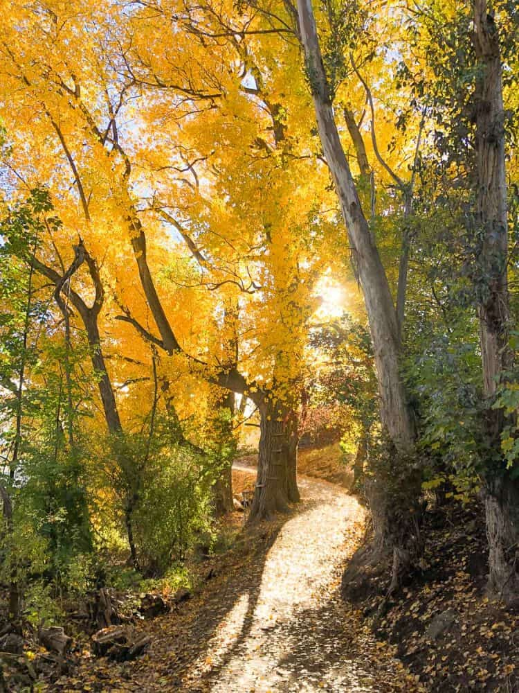 Lake Hayes trail in autumn
