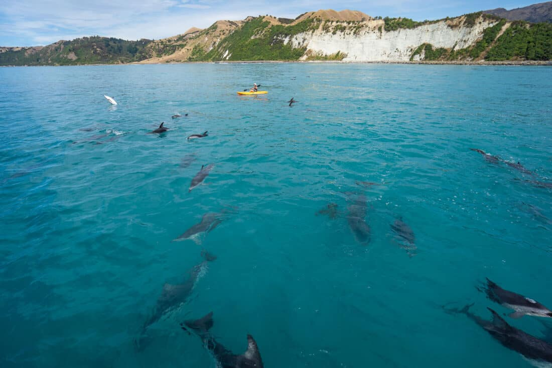 Kayaker with dolphins in Kaikoura on the South Island East Coast NZ