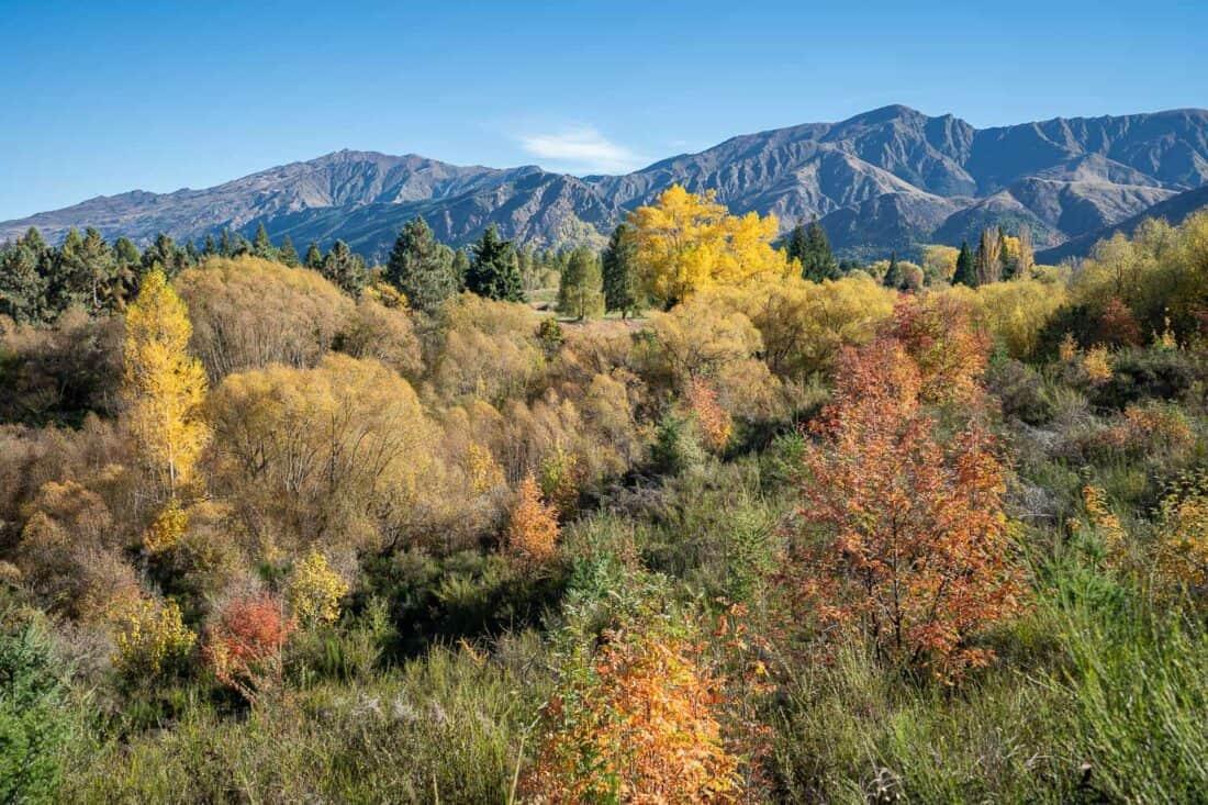 Autumn foliage on the Arrowtown to Gibbston Valley bike trail