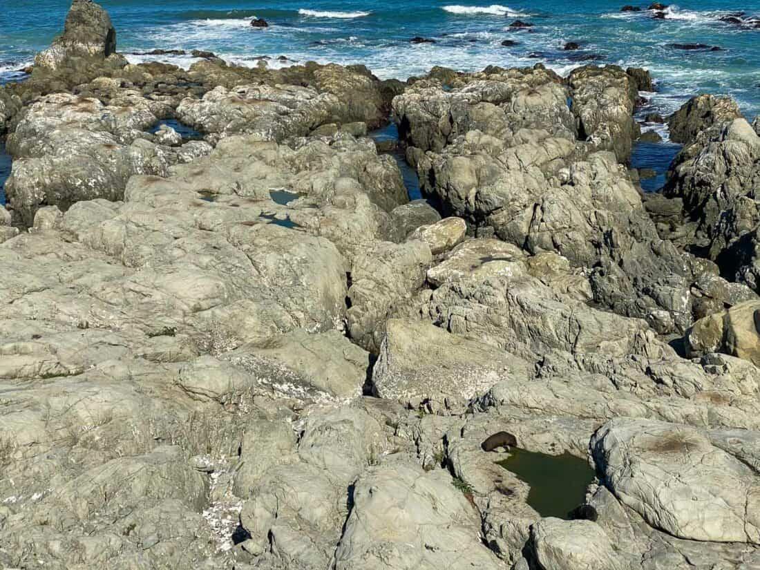 Ohau Point Seal Colony on East Coast South Island New Zealand