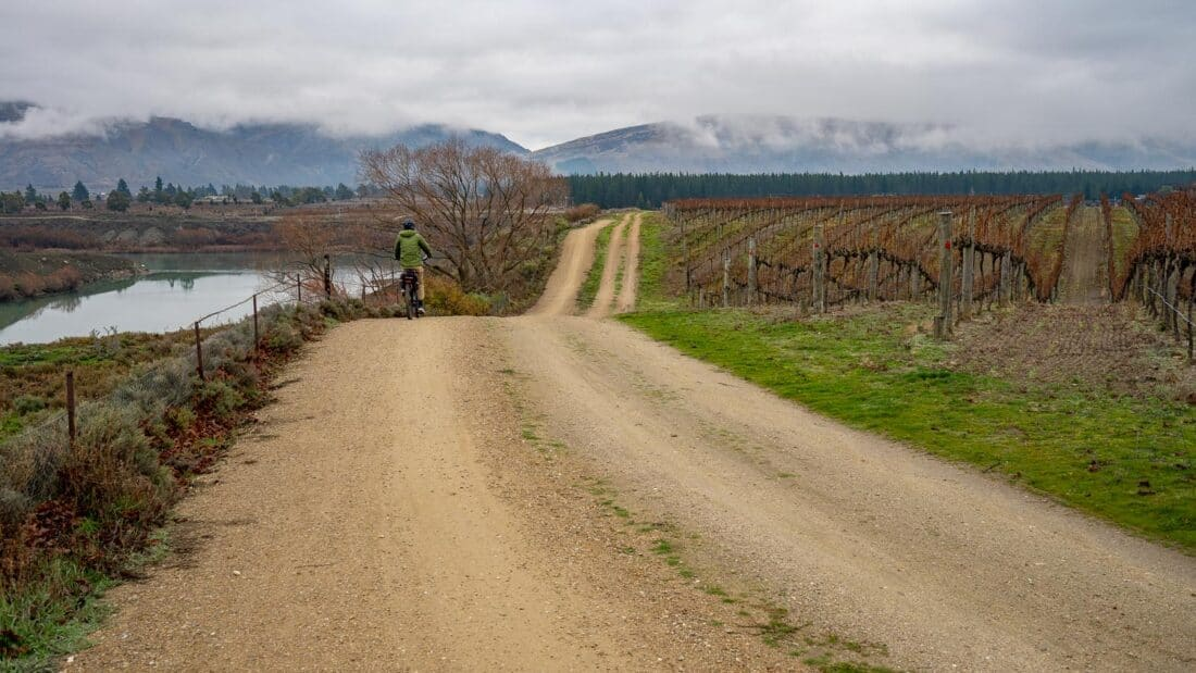 Cycling through the vineyard of Carrick Winery on the Lake Dunstan bike trail